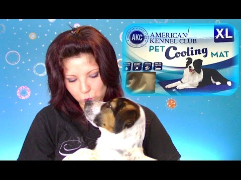 Akc Cooling Mat For Dogs Review Will This Cooling Pad Actually Keep Your Dog Cool