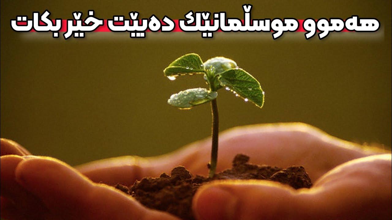 هەموو موسڵمانێک دەبێت خێر بکات. دکتۆر عوسمان هەڵەبجەیی d.osman halabjayi