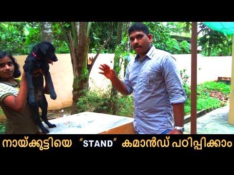 dog training : ' STAND'  Malayalam : kerala dog training : വളര്ത്തു നായയെ പരിശീലിപ്പിക്കാം