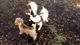 ♪ Dog Run 5 ♪