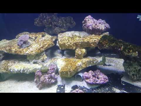 Life in sea tank.