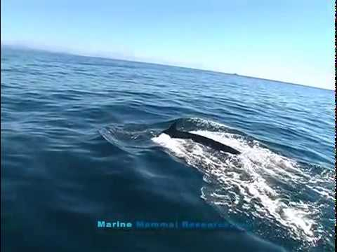 Marine Explorer Expedition humpback whales