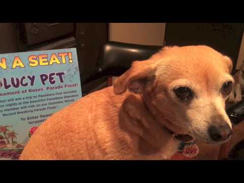 Lucy Pet WIN A SEAT Winner!