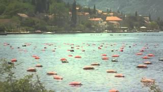 Выращивание мидий в Черногории
