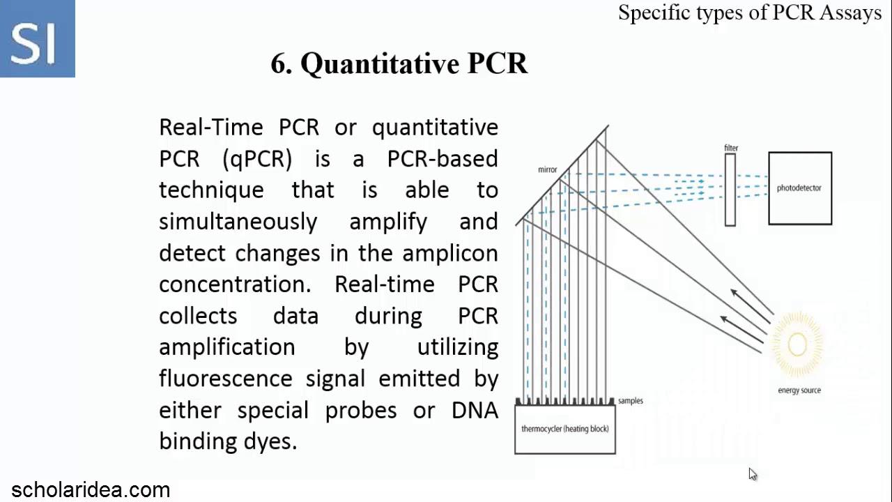 types of pcr - Parfu kaptanband co