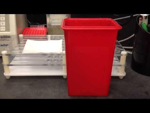 Blood Bank-Antibody Screen (Prewarm Technique)