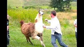 Ozzy Man Reviews: When Animals Fight Back #3
