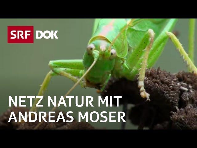 Tiere im Naturgarten | Wem gehört der Garten? | NETZ NATUR mit Andreas Moser | Doku | SRF DOK