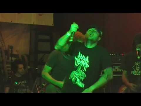 THE DOMESTICS - Live@The Boars Head/Kidderminster (10.09.2016) Mp3