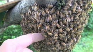 sticking-hand-into-beehive