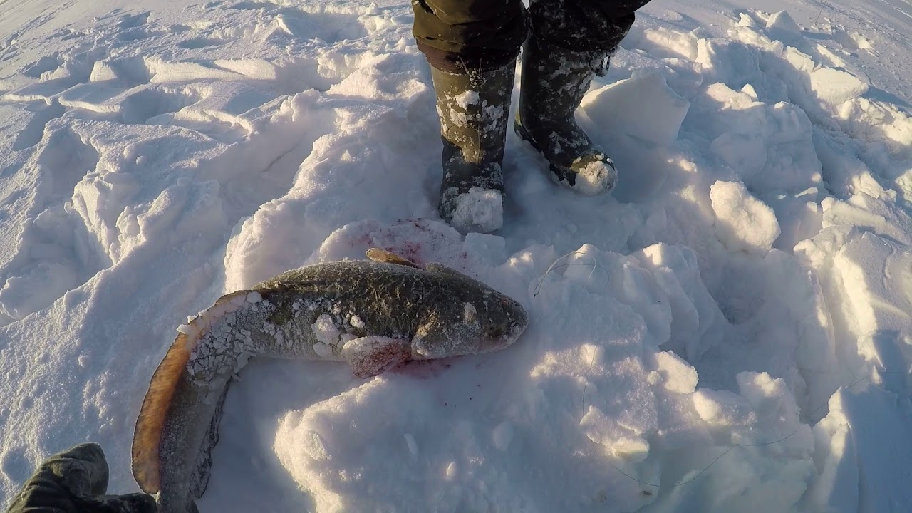 Рыбалка на иртыше налим зимой