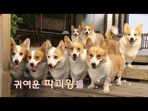 8코기네-귀여운(?)-파괴왕들