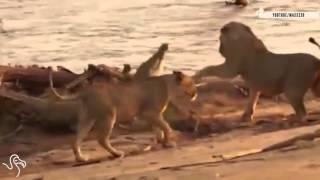 Động vật cứu nhau ... xem mà ngẫm con người có khi lại thua cả động vật