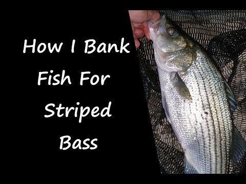 How I Bank Fish For Striped Bass