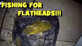 Fishing for FLATHEAD CATFISH in PITTSBURGH!