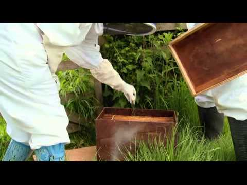 BBC The Wonder of Bees with Martha Kearney