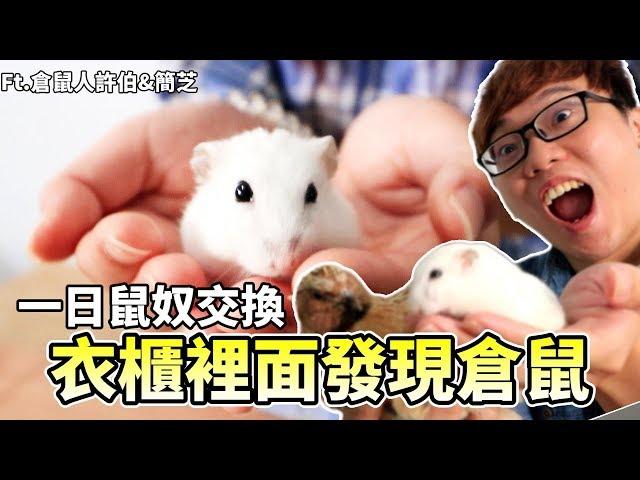 【維鼠日記】衣櫃裡面發現倉鼠!挑戰一日鼠奴交換【維特】#23 ft.許伯&簡芝—倉鼠人