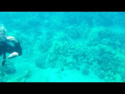 Dangerous sea snail