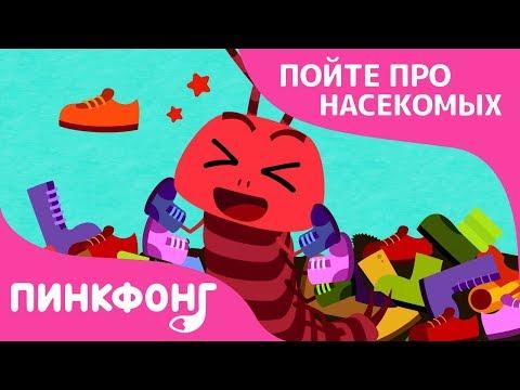 100 туфелек многоножки   Песни про насекомых   Пинкфонг песни для детей