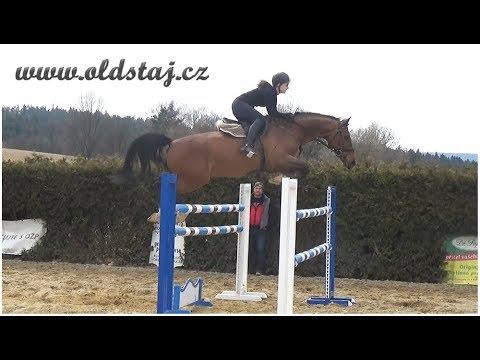 1.30+ JUMPER FOR SALE: Fernando, 2010, Vigaro x Landadel, training outside 03-18