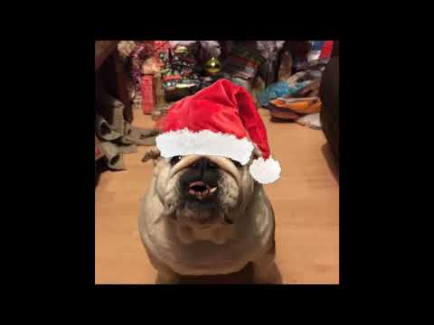 MERRY CHRISTMAS YOUTUBE SEASONS GREETINGS FROM @collectibulldog and wiggles