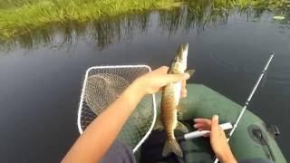 Отличный клев щуки!!! Ловля щуки на спиннинг с лодки!