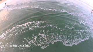 Paddleboarder Nearly Hits Shark! Drone Footage