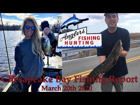 Chesapeake Bay Fishing Report: March 20th 2020