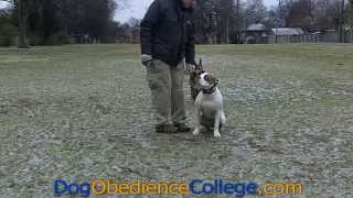 Cotton Dog Obedience Training Memphis
