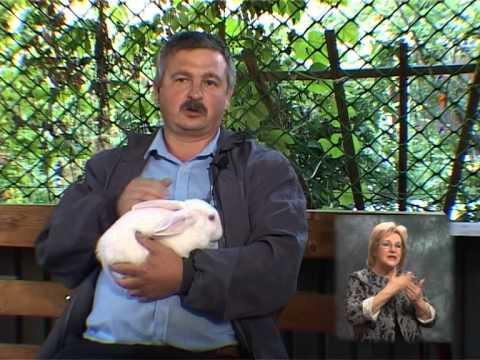 Мясошкурковые кролики. Живой уголок 32. С переводом на жестовый язык .
