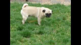 Albert the Dog doing the Potty Dance
