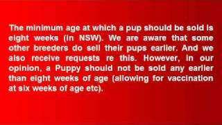 Golden Labrador Puppies Sydney Nsw Australia