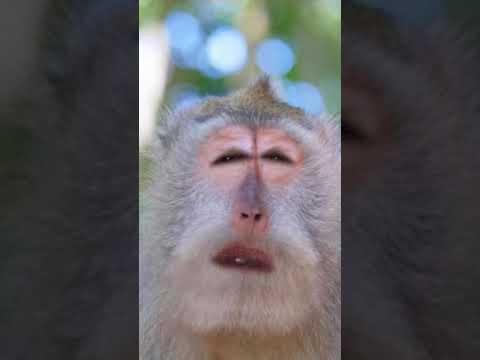 Never deny the monkey power
