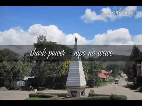 SHARK POWER - NIPO NA WEWE