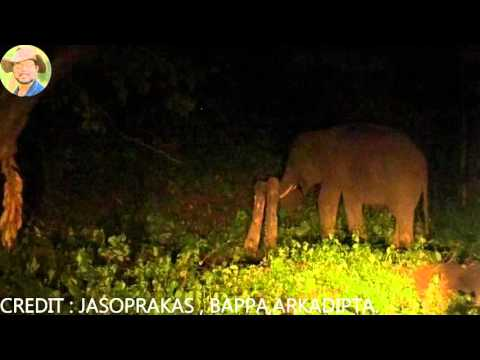 Night Video Of A Tusker Elephant.