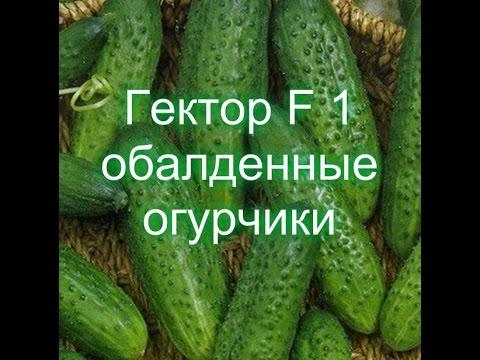 ф1 news