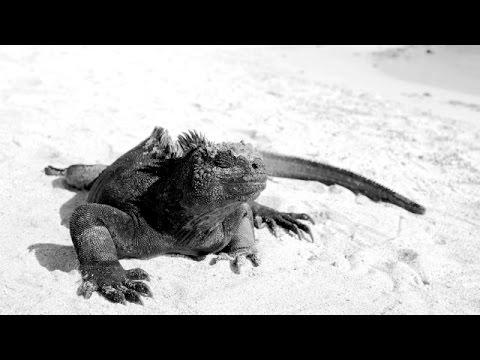 Silversea Webinar - The Galapagos Experience