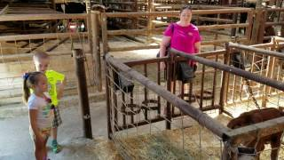 Cows & Calves at Dairy Farm in Creston,  British Columbia,  Canada
