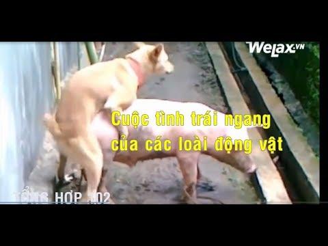Hài: Cuộc tình trái ngang của động vật