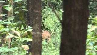 Koka Wildlife Sanctuary Bhandara District Maharashtra India Video By Dr.  Akash Akinwar