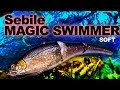 Sebile - Magic Swimmer (soft)