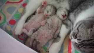 Новорожденные котята - 2