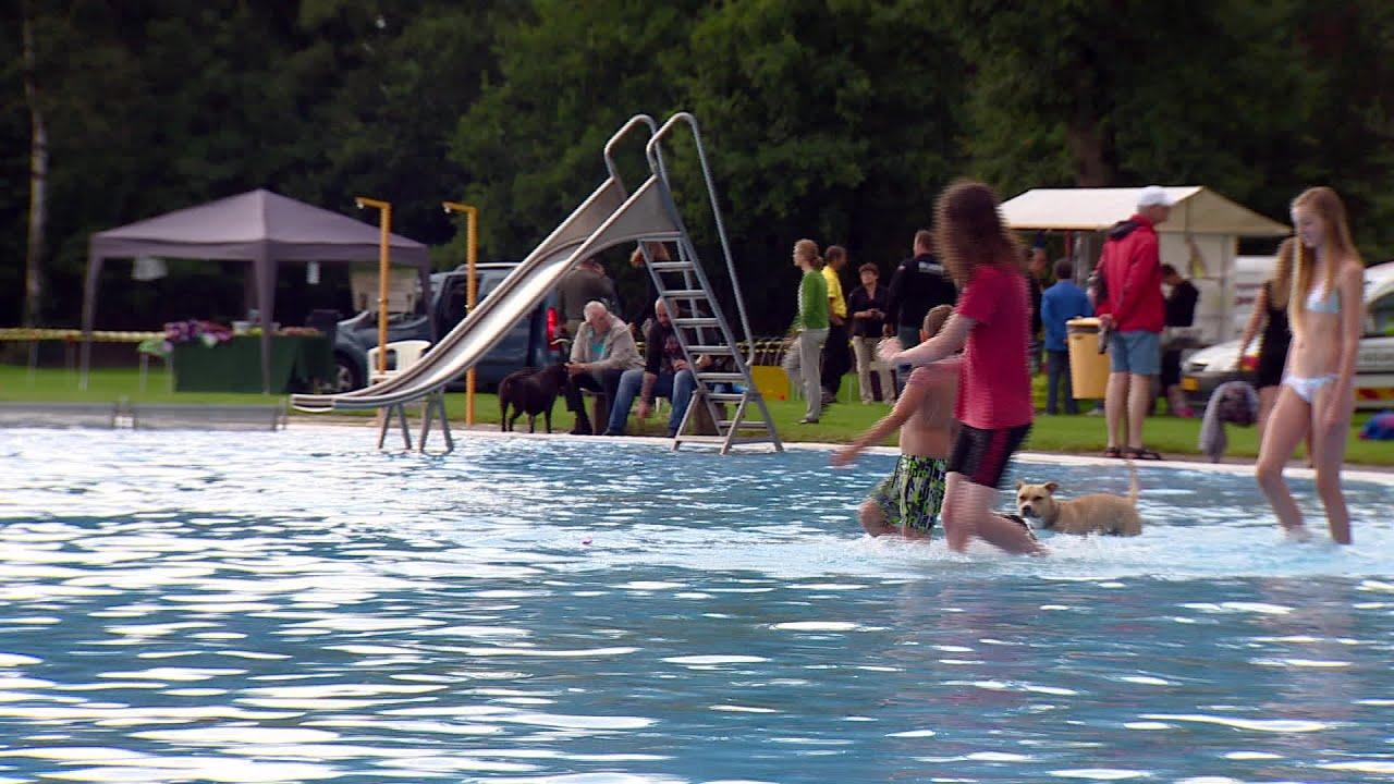 Afsluiting Van De Zomer: Honden Zwemmen In Zwembad