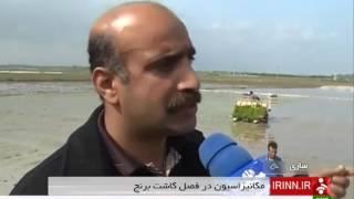 Iran Mazandaran province, Mechanized Rice cultivation كشت مكانيزه برنج استان مازندران ايران