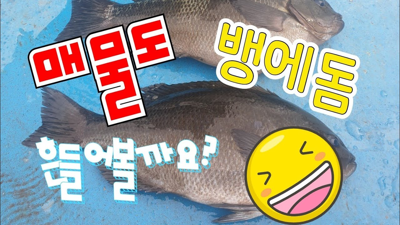 통영 매물도 벵에돔낚시 실시간방송 하이라이트2020년07월05일