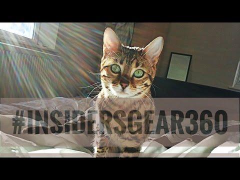 Cat catching the sunrise (Time Lapse) #insidersgear360