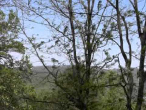 Virginia beauty - The Cider House Rules Theme - David Snell & John Lenehan