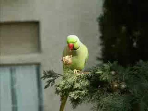 HandJivin' Green Parrot