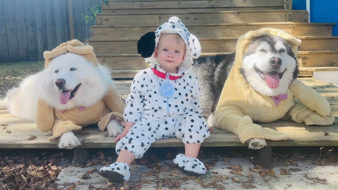 Halloween Costume Fun For Some But Not The Mad Malamute