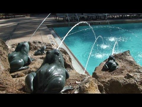 Detailed Pool Tour at Treehouse Villas - Disney's Saratoga Springs Resort, Walt Disney World